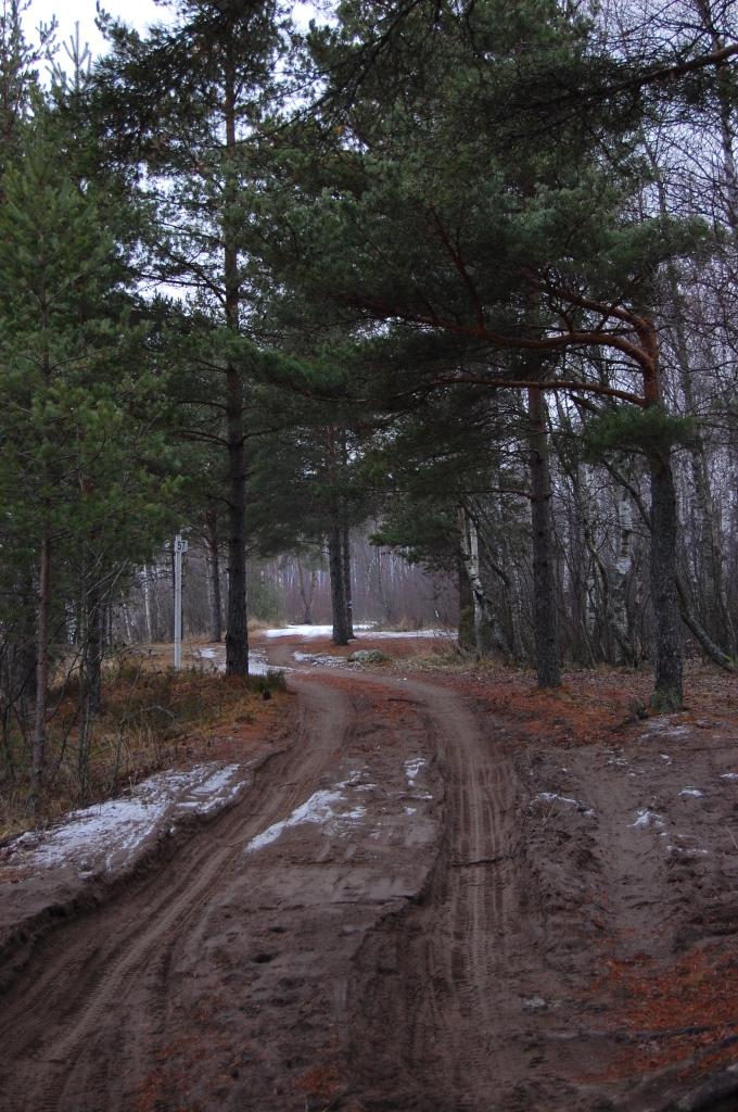 Окрестности Леднево1
