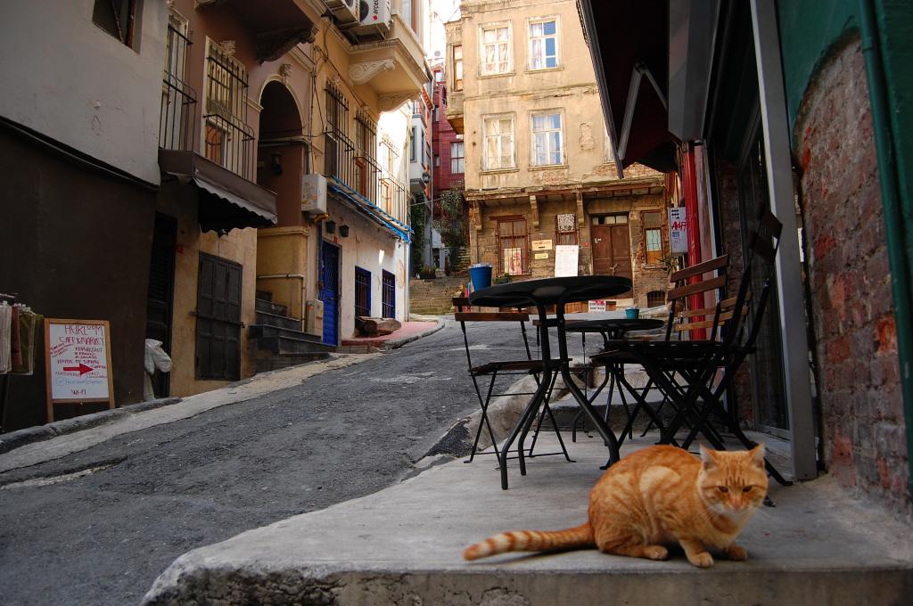 Турция, коты