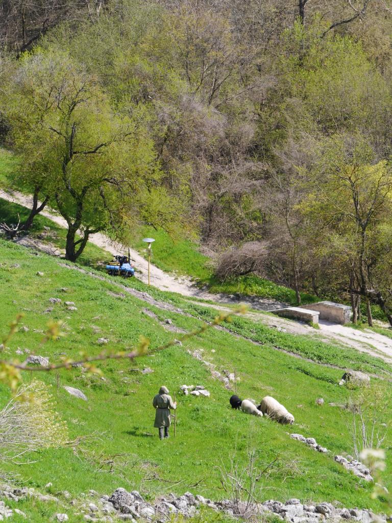 Пастух идёт кататься на велосипеде